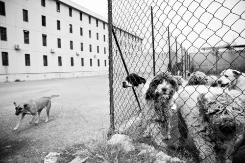 O.P.G. - Ospedale Psichiatrico Giudiziario di Reggio Emilia.