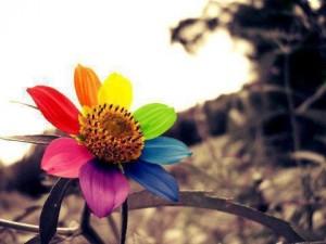 colori_fiore