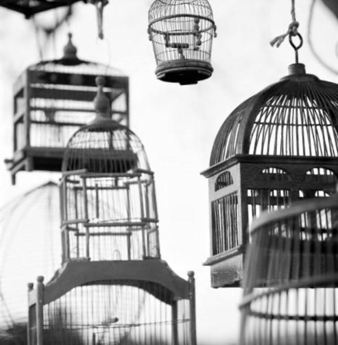 gabbie_uccelli_birdcages_